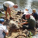 Basilosaurus Excavation