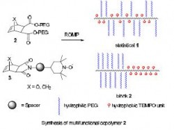 Schanz functionalized copolymers for neuroprotection 1