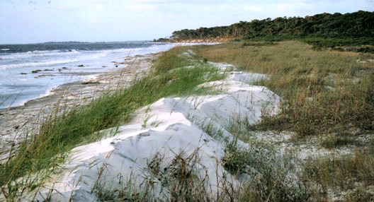 Shoreline of North Beach, St. Catherines Island