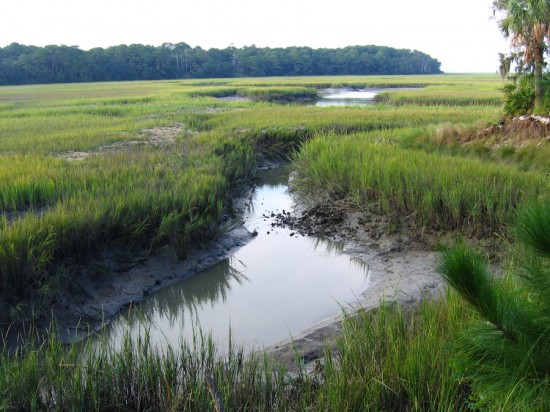 The modern marsh hosts tidal creeks and mud flat flora and fauna.