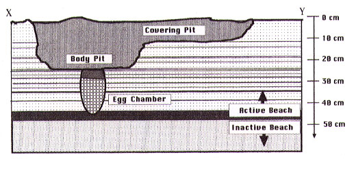 nest_cross_section