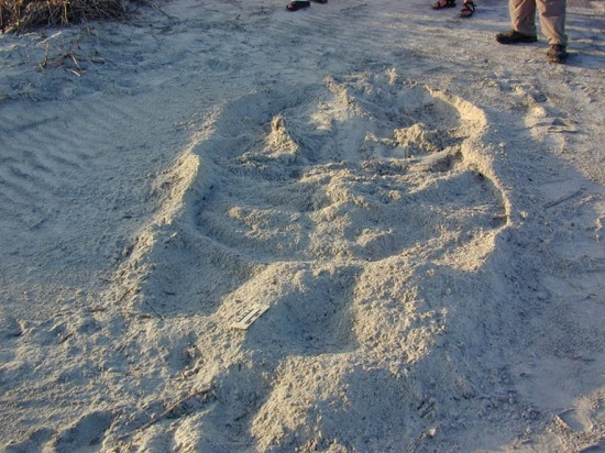 sand_angel