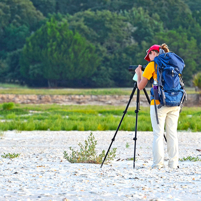 Graduate student Mary Strickland studying Wilson's Plovers on Cumberland Island, GA.