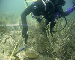 Lauren Stefaniak, Postodoctoral Associate, ICPS, installs a stainless steel bolt in the reef that will secure a terra cotta tile used as settlement substrate.