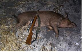 dead_hog_brown