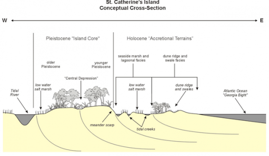 St. Catherines Island Conceptual Cross-Section