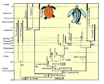 kear&lee_2006_cladogram